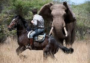 Polo horseback safari