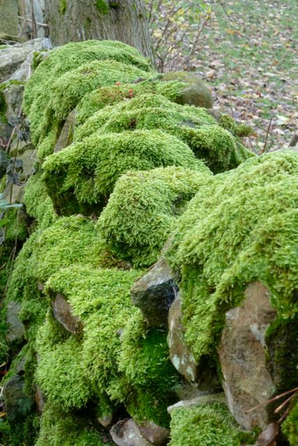 Moss-What-a-sight-I-d-forgotten-this-could-exist
