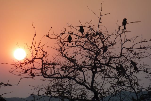 Birds-roosting-for-the-night