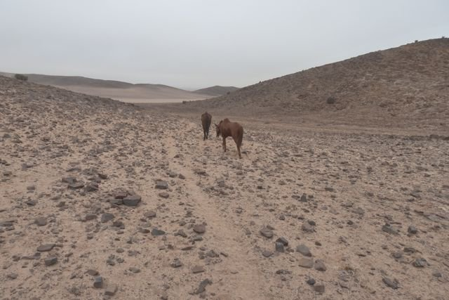 Deep-in-the-Namib-our-two-spare-horses-follow-a-z
