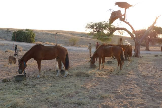 Horses-were-fit-and-well-fed-four-times-a-day-Heap